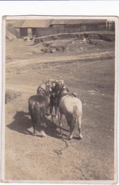 Na snímku zachycena Neubauerova stodola (po roce 1945 - Málkova). Snímek do roku 1945. Bohužel na snímku málo čitelný ,,kepl,,. Zařízení pro pákové mlátičky. Do keplu se zapřahali koně.