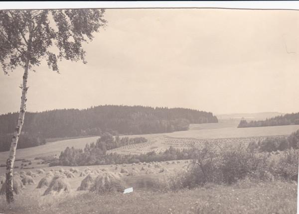 """Pohled ze """"Svinčáku"""" směr Studénky. Postavené panáky žita čekají na vysušení. Mlácení žita společné. Mlátička poháněná traktorem s řemenicí."""