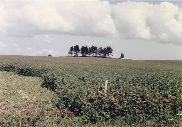 Tři smrče, rok 1957-58